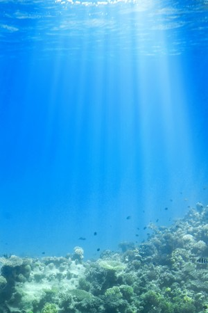 Underwater scene with sun rays through water. Stock Photo - 3946551