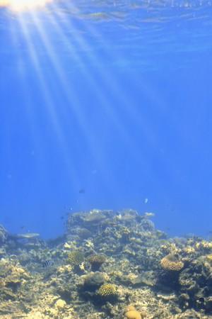 Underwater scene with sun rays through water. photo