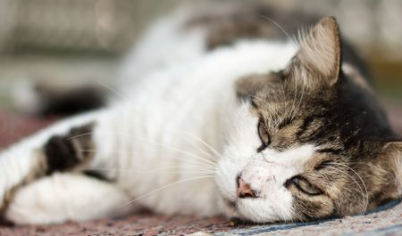 Domestic cat lieing down and looking at camera. Stock Photo - 5637626