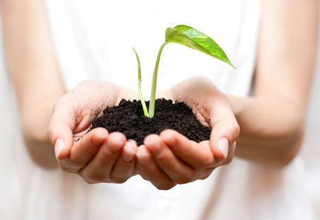 Holding small plant in hand. Stock Photo