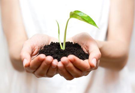 Holding small plant in hand. Standard-Bild