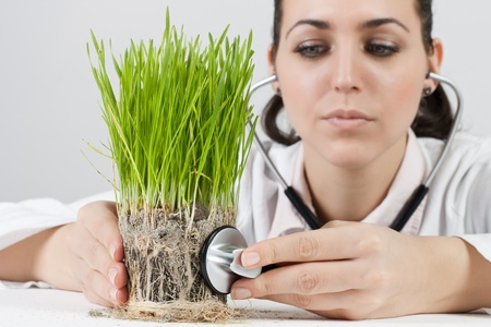 Female doctor with a stethoscope checked green plant. photo