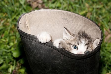 Curious little cat peek out the  boots. Standard-Bild