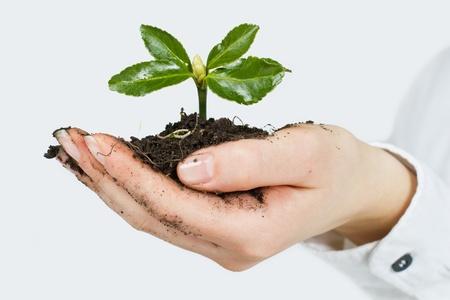 medio ambiente: Peque�a planta que crece en la mano del hombre. Foto de archivo
