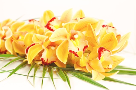 Yellow orchid with green decoration over white background.