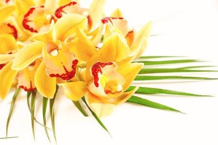 Yellow orchid with green decoration over white background. photo