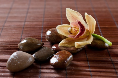 Flower orchid and zen stones. photo