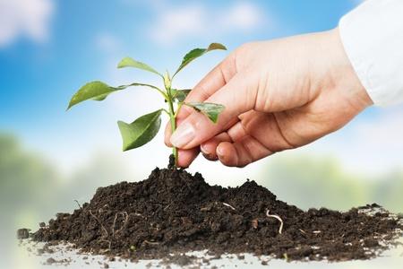 Manos humanas dando apoyan a una pequeña planta sobre fondo de naturaleza.