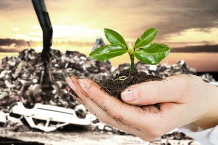 Ökologiekonzept kleine Pflanzen in der hand mit Auto-Dump im Hintergrund.