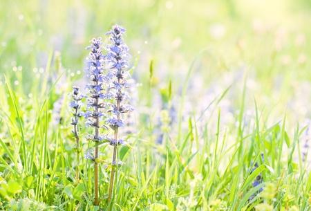 Mooie lente bloemen met heldere achtergrond bij 's morgens. Stockfoto - 9460040