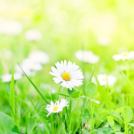 Beautiful scene with spring flower and bright green background. photo