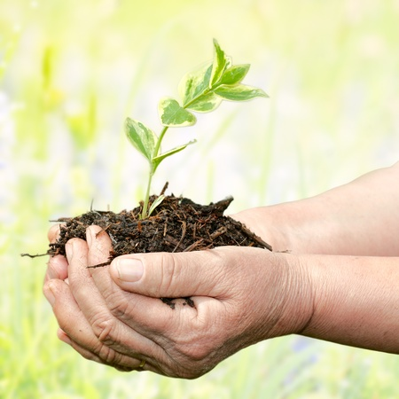 Human hands holding small plant and care about development over natural background.