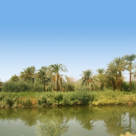 nile: Green area with palm trees along the river Nile in Egypt, near Luxor. Stock Photo