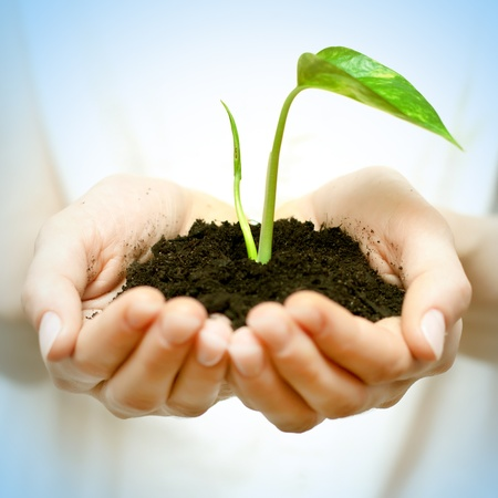 plant seed: Human hands holding green small plant new life concept.