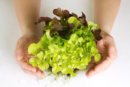 Human hands protecting organic green salad.
