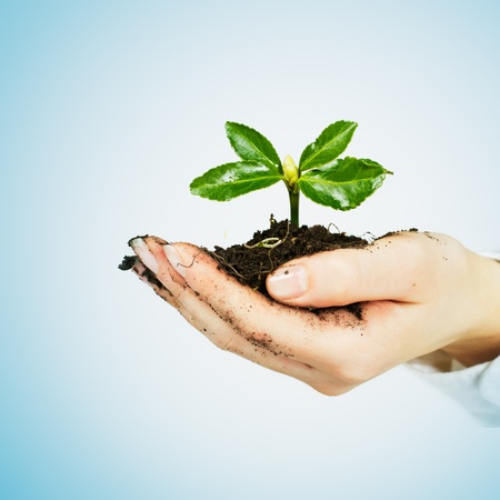 Small plant growing in the human hands  photo