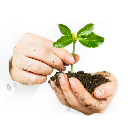 Human hands giving support to a small plant that grows  photo