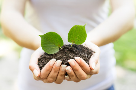 origins: Human hands holding and support small plant to grow up. Stock Photo