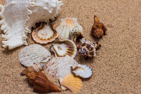 textured backgrounds: Sea Shell on the sand beach. Summer travel vacation concept. Stock Photo