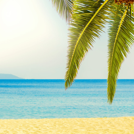 tropical tree: Tropical Beach,Summer Travel Destination with green palm tree branches,beautiful blue seascape and sun light over sky