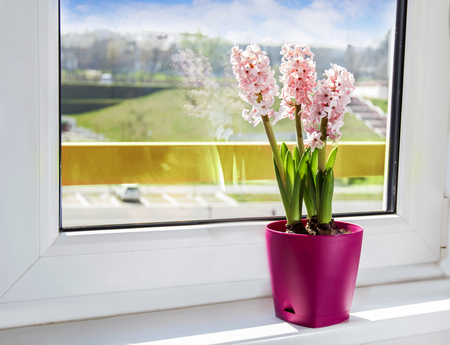 Spring flowers hyacinth ,in violet vase, on window sill.