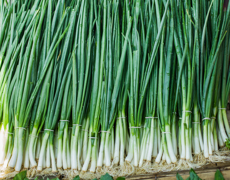 spring onions: Fresh Spring Onions on the farmers market.