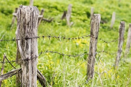 barbed wire fences: Old Wooden Fence with barbed wire at daylight. Stock Photo