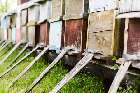 hives: Bee hives in the meadow at daylight. Stock Photo