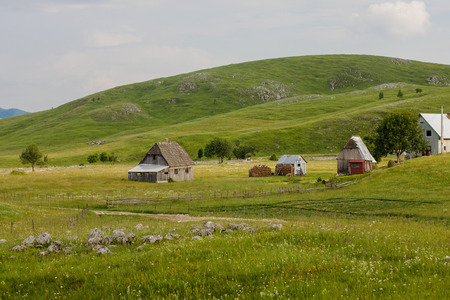 Rural houses in the green valley at summer morning with scenic nature background.