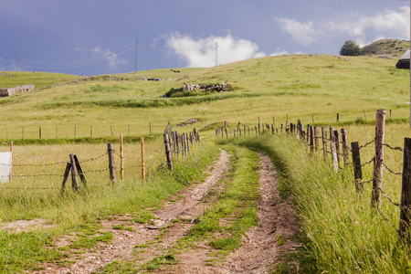 Idyllic scene of rural road near green pasture and scenic view of nature landscape at summer day.