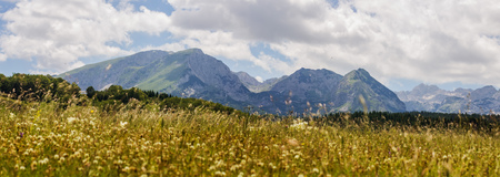 majestic: Nature summer mountain landscape , green forest and meadow. National park Durmitor, Montenegro, Europe.