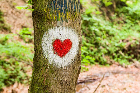 Marked hiking healthy trail, heart shape sign on the tree.