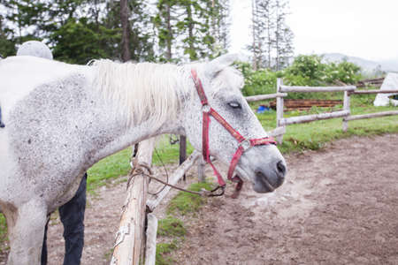 Portrait of beautiful white horse at stable. Closeup view