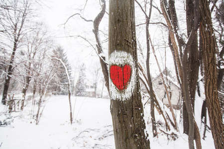 Marked hiking trail, heart shape sign on the tree. Winter cold snowy day.