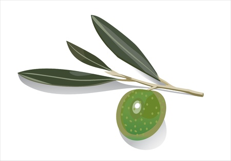Olive on branch Stock Vector - 13928669