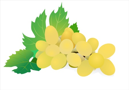 Fresh grape fruits with green leaves isolated on white background Stock Vector - 13928722