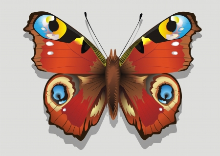 Colourful   Butterfly    illustration  Vector