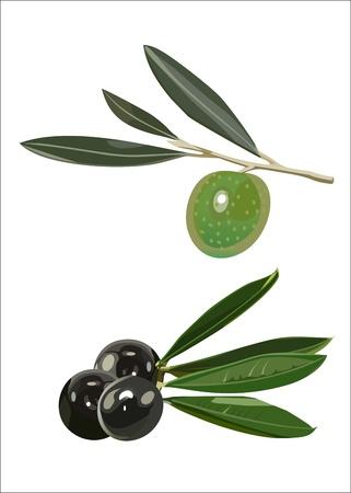 set - olive branches Ilustração