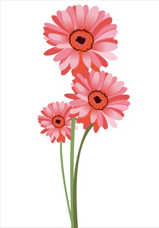 gerber flowers: Pink gerbera flower. Isolated on white Illustration