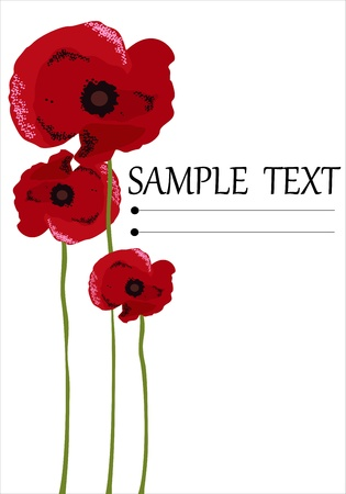 Poppy flowers isolated on white background Vector