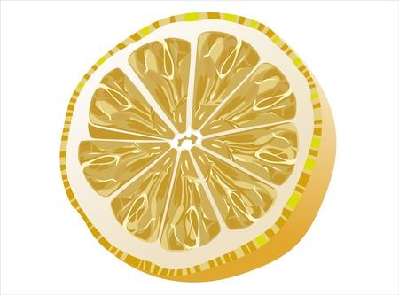 Slice of fresh lemon isolated on white background Stock Vector - 14630924