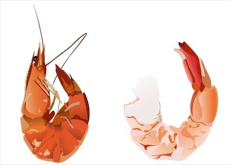 krill: Boiled shrimp isolated on white