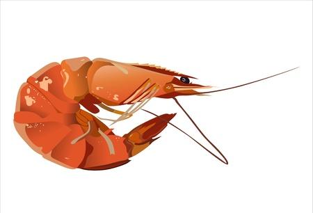 Boiled shrimp isolated on white Vector