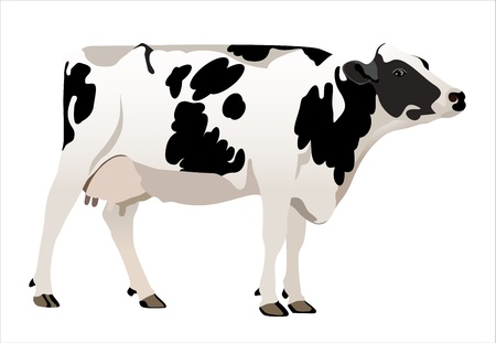 cows grazing: cow vector illustrator