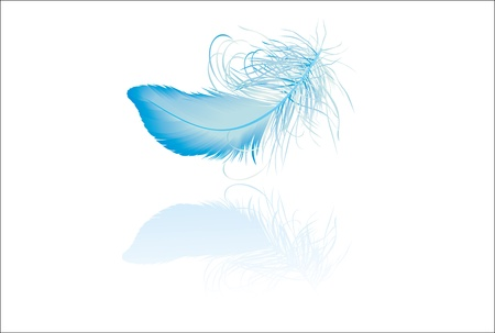 Blue elegant feather with reflection
