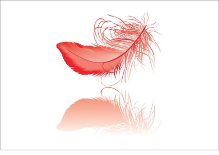 falling feather: Red feather with reflection