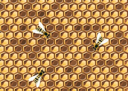praiseworthy: Close up view of the working bees on honeycells.