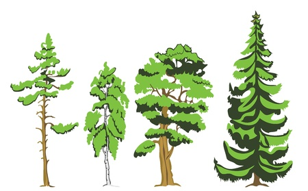 Trees isolated Stock Vector - 19893174