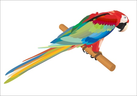 red parrot illustration vector Stock Vector - 21237325