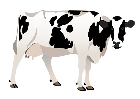 nose close up: cow isolated on a white Illustration
